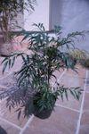 0102_mah_zen_091014_02_small