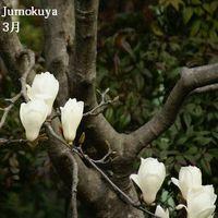 0201_hmok_han_100315_01_small