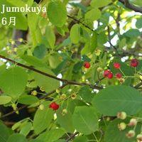 0201_jun_100531_02_small