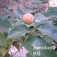 0101_jog_mi_090927_nino_s