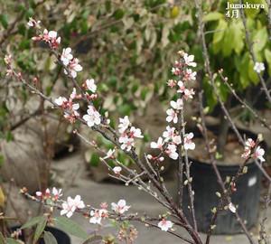 0202_yus_hana_1604_01