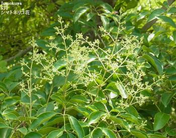 0101_shi_seichougo_1606_05